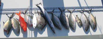 Strike zone maui bottom fishing for Maui bottom fishing